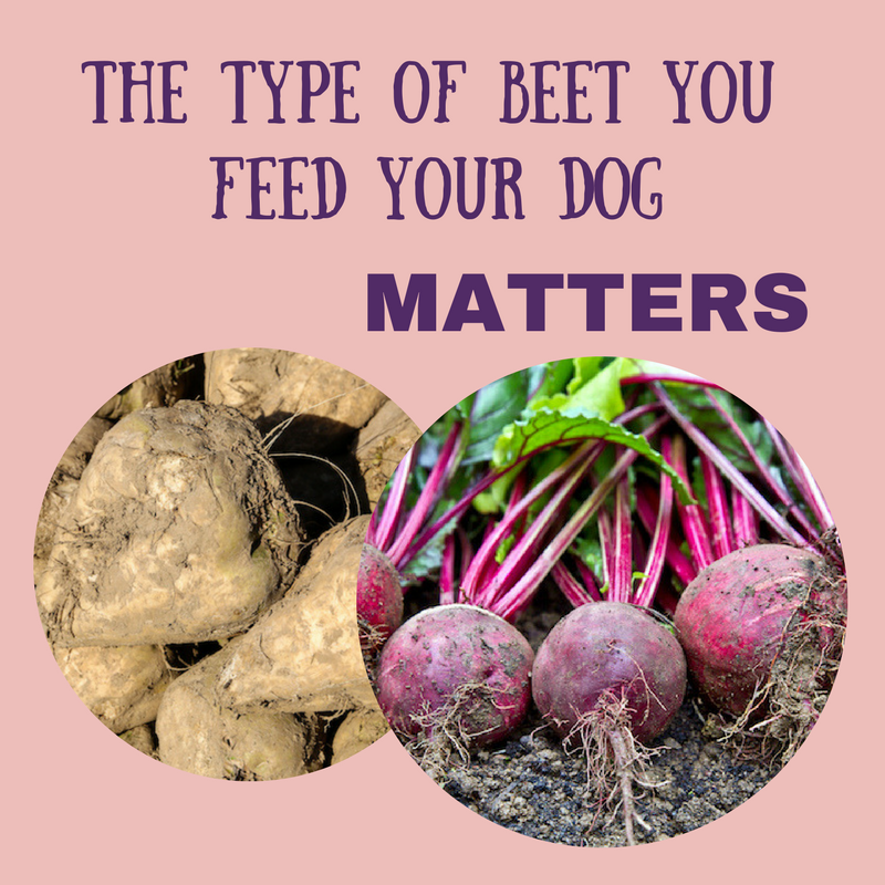 Can Dogs Have Root Vegetables